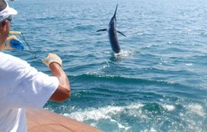 black-marlin1